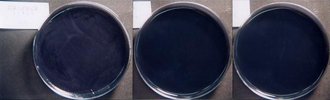 レジオネラ菌
